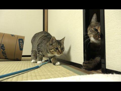 保護子猫ちゃんと強引に入ってくるルル
