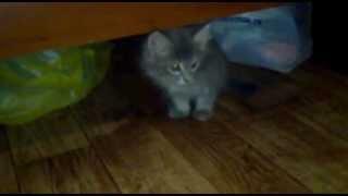Котенок под кроватью