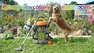 Как отучить собаку подбирать с земли... Дрессировка собаки.