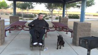 Dog Training Phoenix Az - European Doberman Pinscher - On/ - Off Leash Obedience - Cain