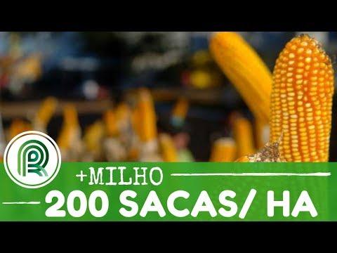 Produção tamanho família: 200 sacas por hectare