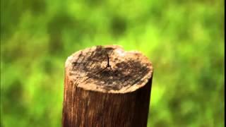 ตอไม้ที่ตายแล้ว เอกราช สุวรรณภูมิ
