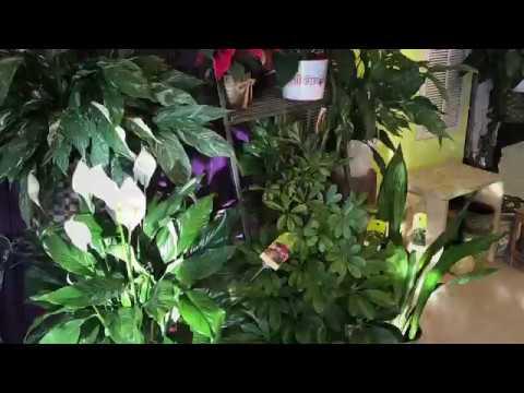 Guide to Gifting - Secret Garden
