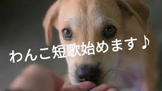 犬は共に暮らす仲間です。 犬との暮らしの中で思いついたままを短歌にし...