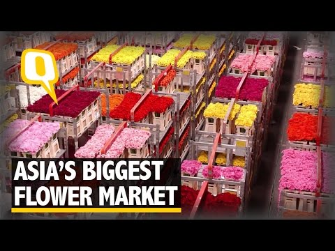 The Quint: The Dounan: Asia's Biggest Wholesale Flower Market