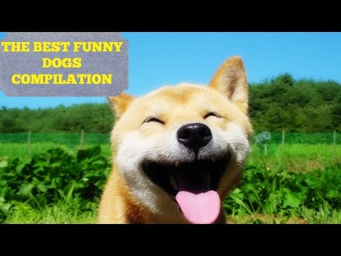 The Best Funny Dogs Compilation - TRY NOT TO LAUGH!