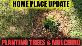 Home Place Update  Planting Trees and Mulching