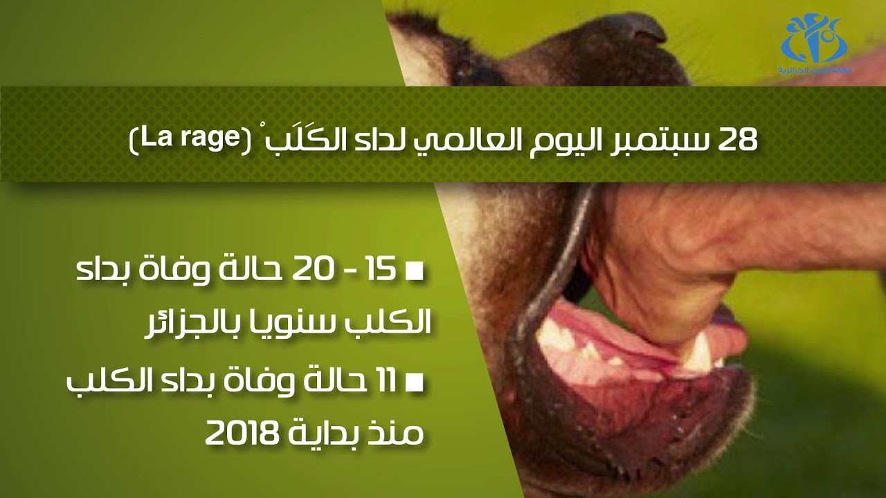 """Résultat de recherche d'images pour """"La Rage l'Algérie"""""""