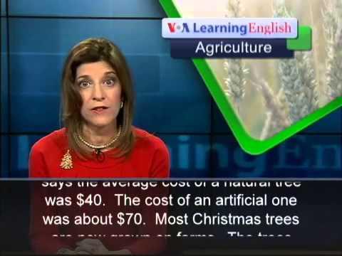Farmed Christmas Trees Aid the Environment