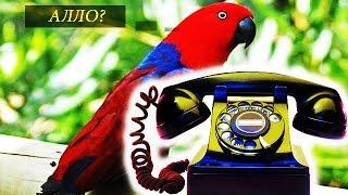 Самый лучший пародист телефонного звонка