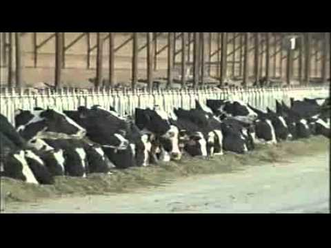 Tub Grinders - Shenk Farm Equipment and Livestock
