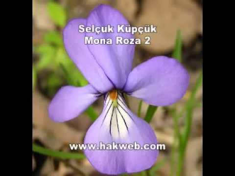 Selçuk Küpçük Mona Roza 2 http www hakweb com