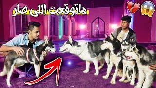 4 كلاب يهاجمون على كلبتي لوسي وهي حامل بسبب !!💔😱