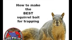 How to make the BEST squirrel bait for trapping