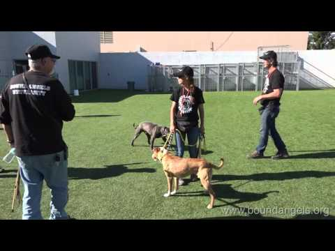 Dog to Dog Interaction and Corrections  -Bound Angels University