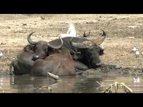 Uganda mit Habari Travel - Teil 2