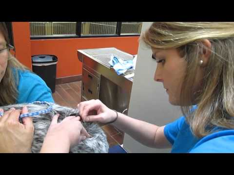 vet-112-perform-a-skin-scraping-part-1-of-2