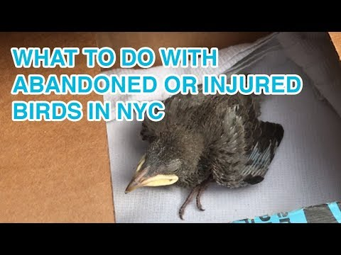 What To Do With Abandoned Or Injured Birds In NYC | WILD BIRD FUND