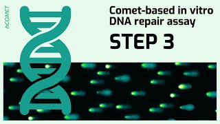 STEP 3: Embedding substrate cells in agarose & cell lysis // Comet-based in vitro DNA repair assay