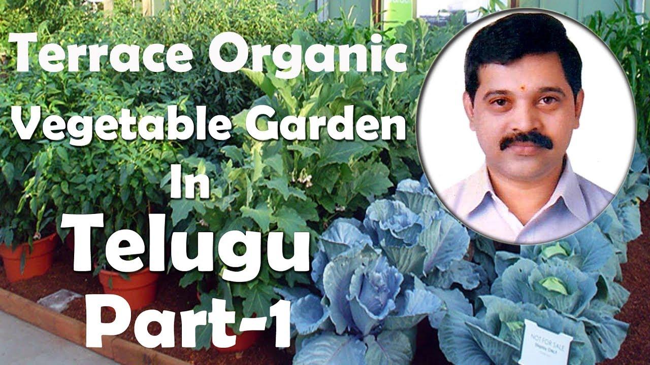Terrace Organic Vegetable Garden In Telugu Part 1 Vegetables