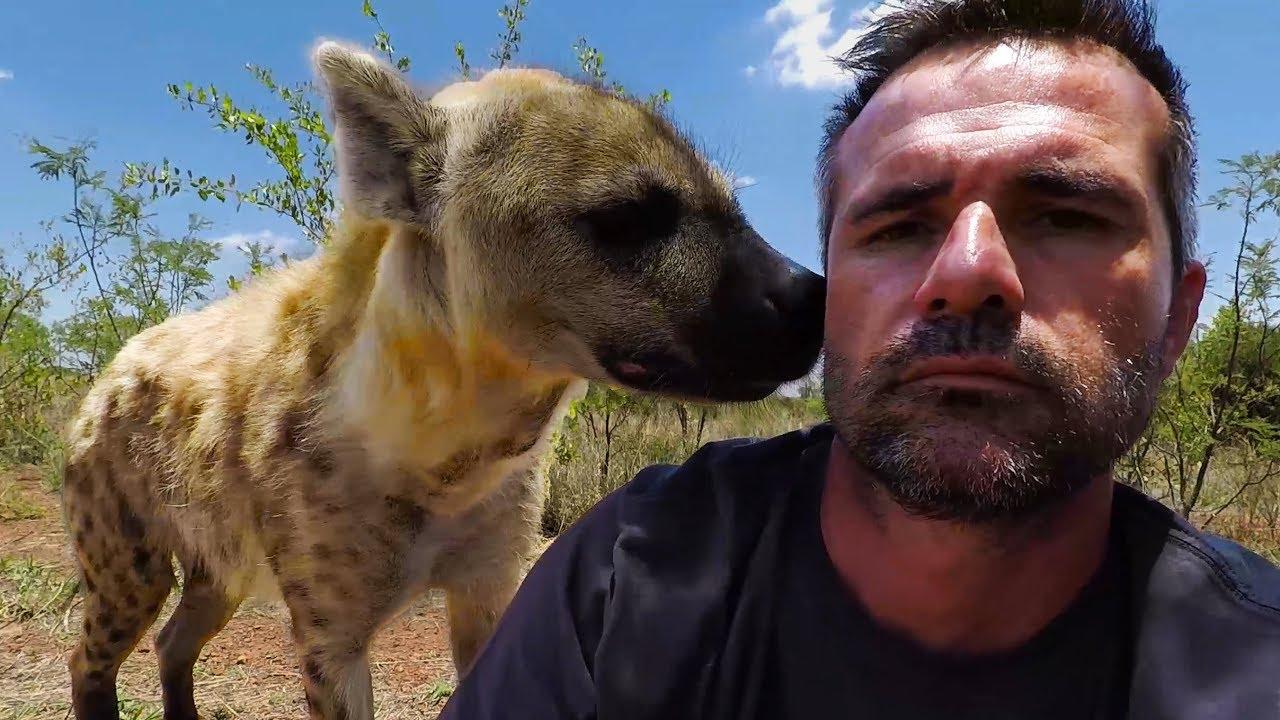 hello-hyenas-the-lion-whisperer