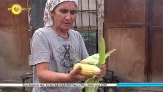 Sarıyar Kasabasında Niyazi - İnci Günel Bağ Evinde Sonbahar Yaşamı 2. Bölüm - Nallıhan Ankara 4K UHD