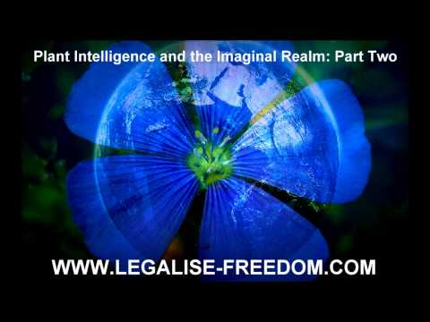 Stephen Buhner - Plant Intelligence and the Imaginal Realm: Part Two