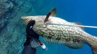 5 balık, 5 fish, zıpkınla balık avı, zıpkın avı, balık avı, spearfishing