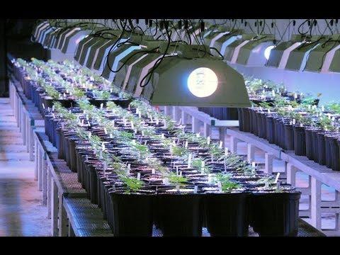 Medical Marijuana facility in Egg Harbor Township