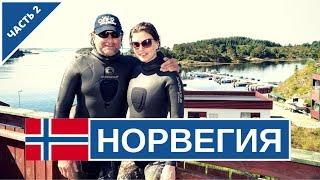 Подводная охота в Норвегии. Как охотится чемпион Норвегии?