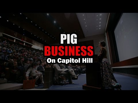 Pig Business on Capitol Hill