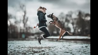 Otha  Malinois Dog Tricks {One Year}