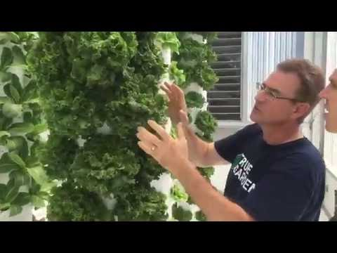TRUE GARDEN - TOWER GARDEN - Aeroponics
