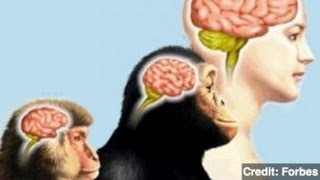 New Study Shows Evolution of