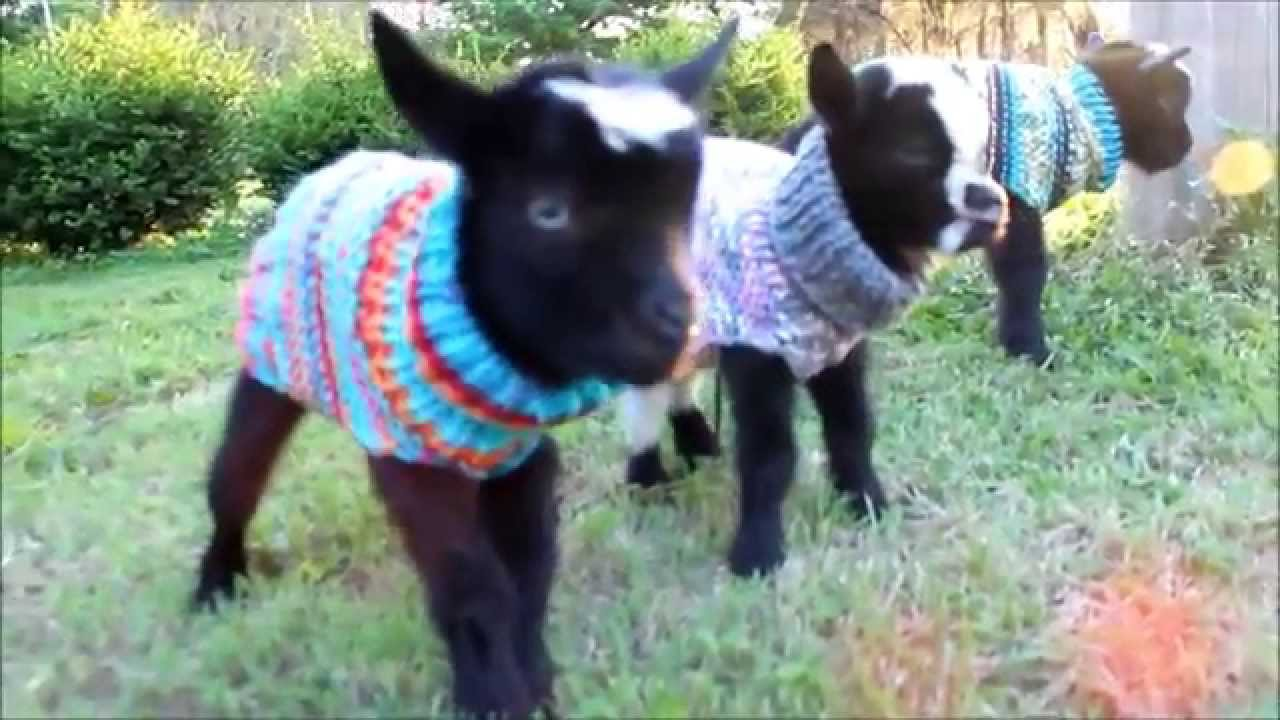 Image result for woolly jumpers