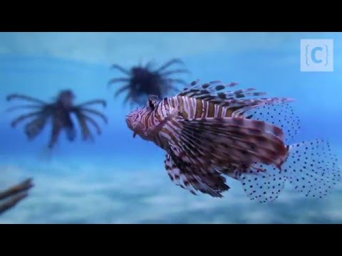 Two Oceans Aquarium – Shark Tank Diving