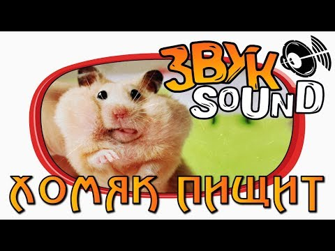 Хомяк пищит ЗВУК / Писк хомяка / Звук хомяка / Hamster SOUND / Hamster FX / Hamster squeaks