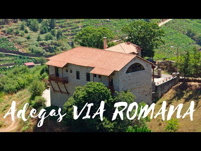 🚗 Visita a Adegas e Viñedos Via Romana