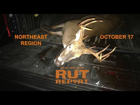 Northeast Rut Report: Deer Daylight Activity Is Increasing