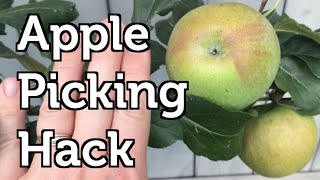 Apple Picking Hack to Reach the top of the Tree