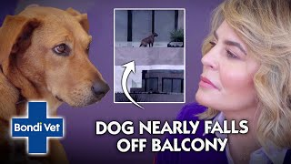 Anxious Dog Threatens to Jump off Highrise Balcony!!   Full Episode   Bondi Vet