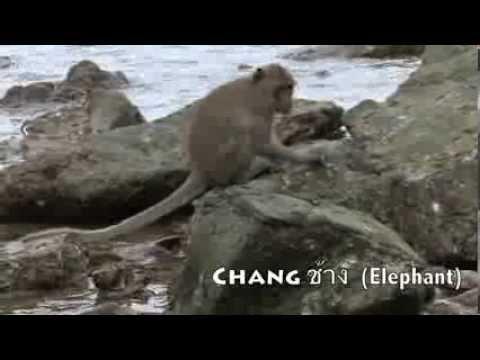 A Guide to the Individual Macaques of Koram Island, Khao Sam Roi Yot National Park, Thailand