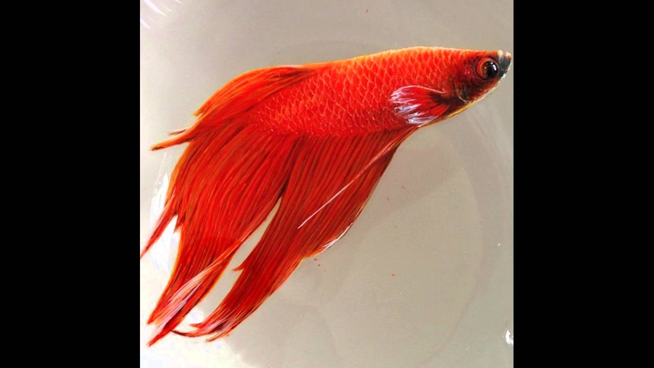 Incredible D Animals Painted In Layers Of Resin By Keng Lye YouTube - Incredible 3d goldfish drawings using resin