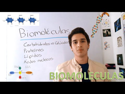 the-cell:-biomolecules-in-3-minutes!!!!