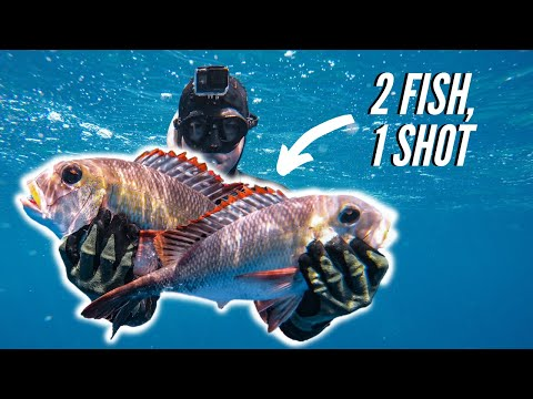 TWO Mu In ONE Shot With BROKEN FIN!!! (Spearfishing Hawaii)