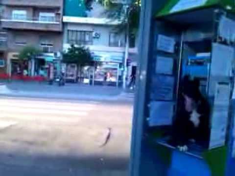 El perro saltarin de FACEBOOK from YouTube · Duration:  5 minutes 3 seconds