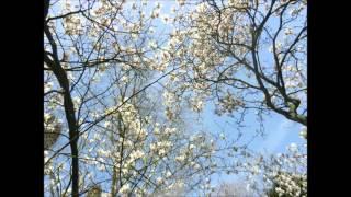- W.A. Mozart - Sonata no.11, (K.331)  mov. 3 Alla turca ( Allegretto)