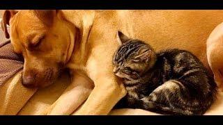 先住犬がいる家に迎えられた子猫3か月の間毎晩一緒に眠ると、まるで・・・【nekoの部屋】