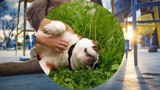 6 Signs of an Unhealthy Dog - (800) 721 - 3326 - FIDO