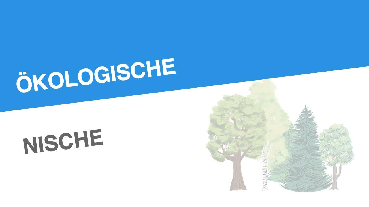 kologische nische biologie kologie - Okologische Nische Beispiel